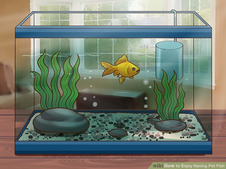 Aquarium clipart pet fish. How to enjoy having