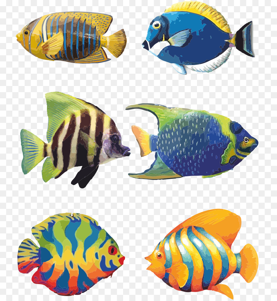 Koi angelfish tropical drawing. Aquarium clipart pet fish