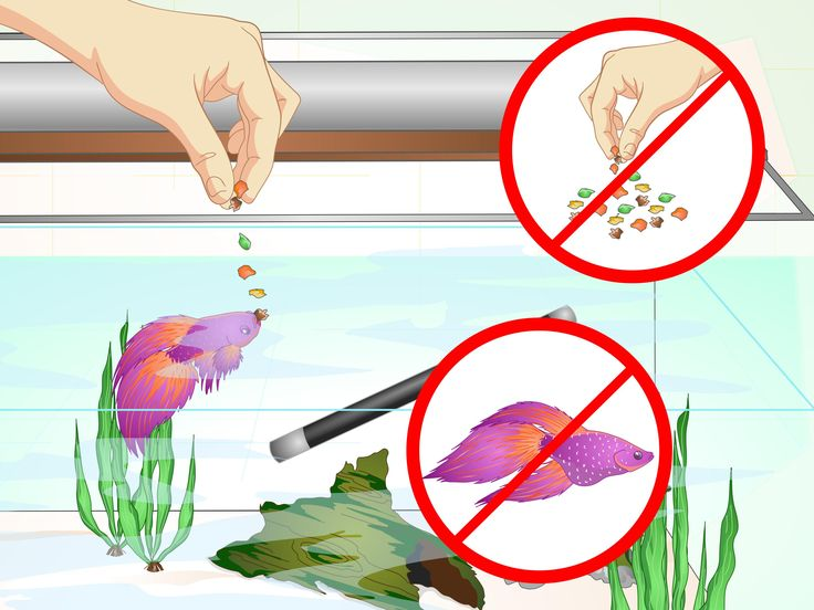 best betta images. Aquarium clipart pet fish