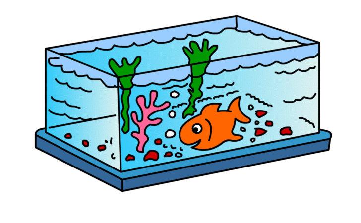 Draw fishtank kids best. Aquarium clipart rectangle