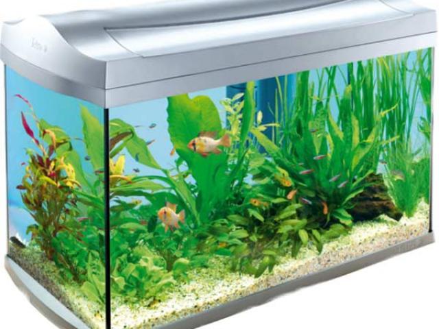 Fish tank free on. Aquarium clipart rectangular aquarium