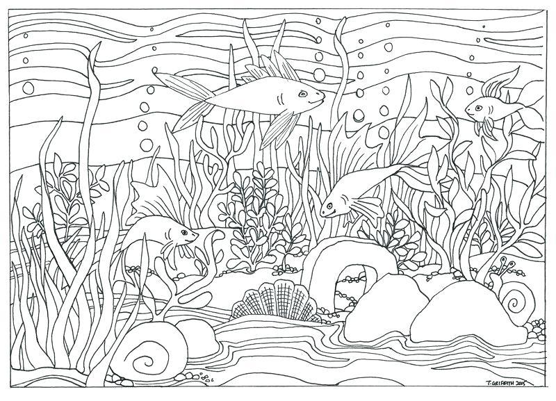Drawing free download on. Aquarium clipart scene