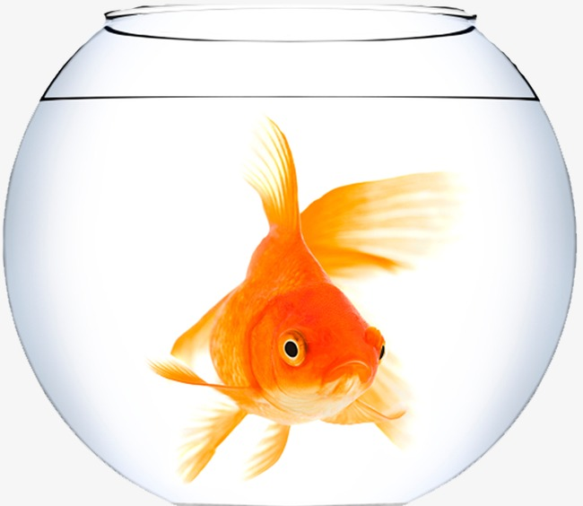 Goldfish tank glass png. Aquarium clipart transparent
