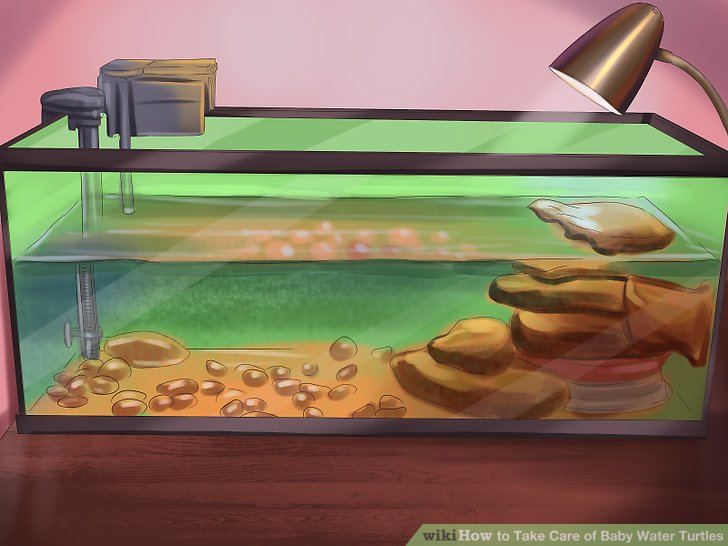 Aquarium clipart turtle.  ways to take