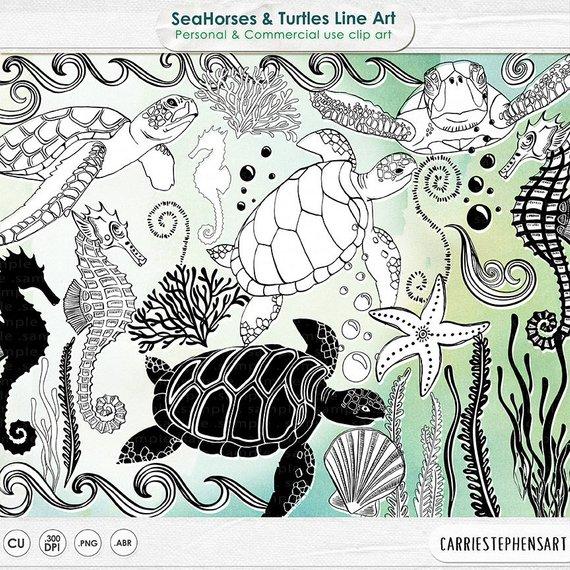 Aquarium clipart turtle. Seahorse line art sea