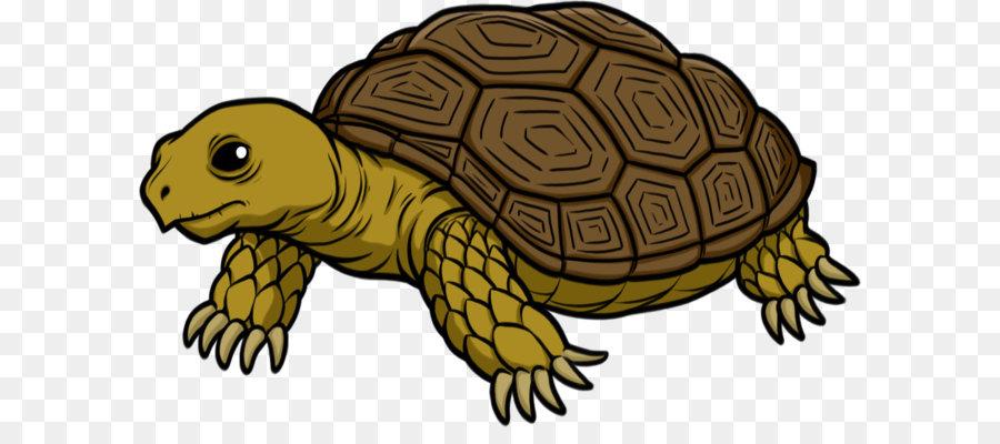 Aquarium clipart turtle. Tortoise clip art transparent