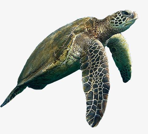 Sea png image and. Aquarium clipart turtle