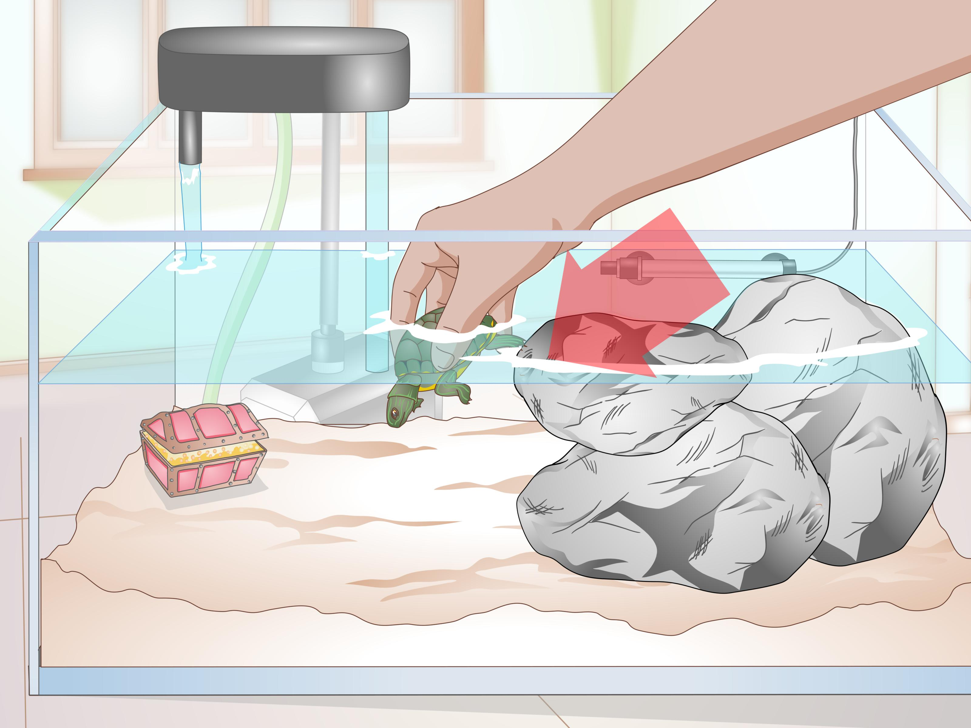Cage clipart turtle.  ways to clean
