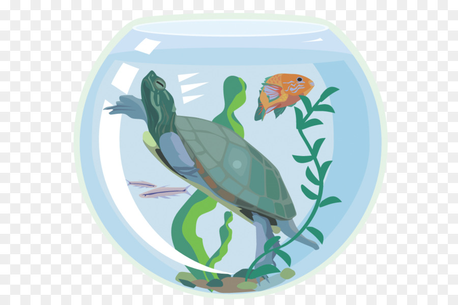 Aquarium clipart turtle tank. Sea background pet green