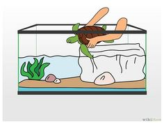 Aquarium clipart turtle tank.  collection of drawing