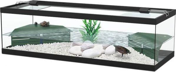 Set up and maintenance. Aquarium clipart turtle tank