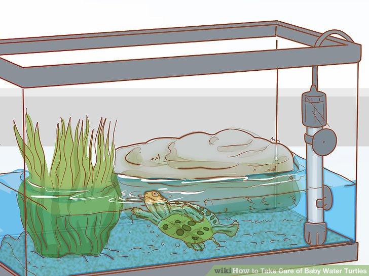 ways to take. Aquarium clipart turtle tank