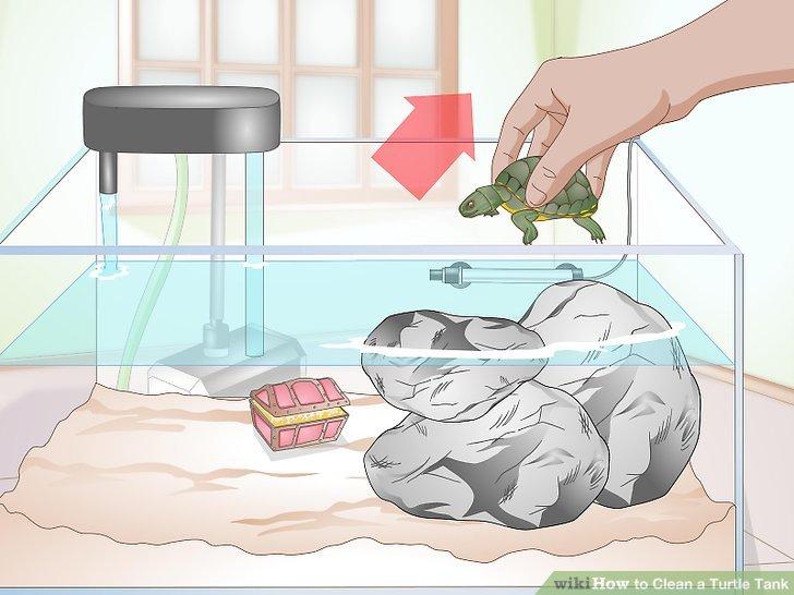 ways to clean. Aquarium clipart turtle tank