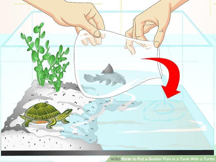 How to put a. Aquarium clipart turtle tank