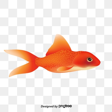 Aquarium png psd and. Goldfish clipart vector
