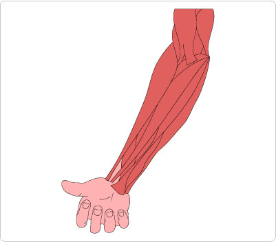 Panda free images forearmclipart. Arm clipart forearm