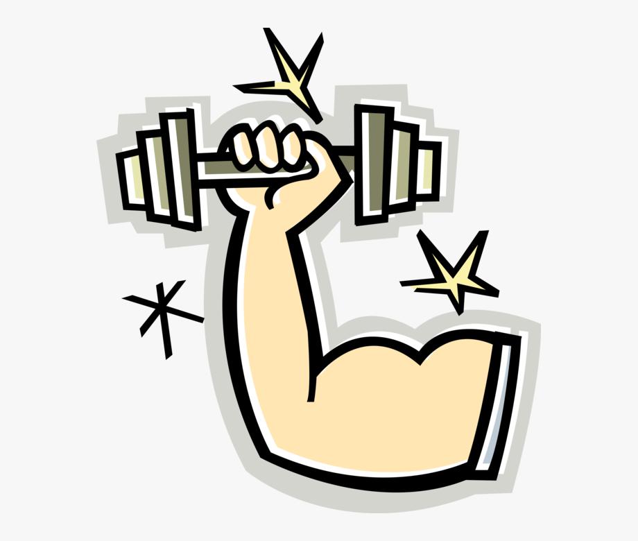 Weight clipart muscle. Arms clip art cartoon