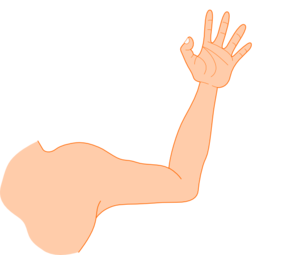 Right . Elbow clipart left arm