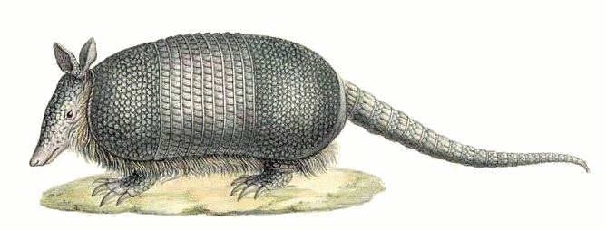 Cilpart sweet idea nine. Armadillo clipart baby