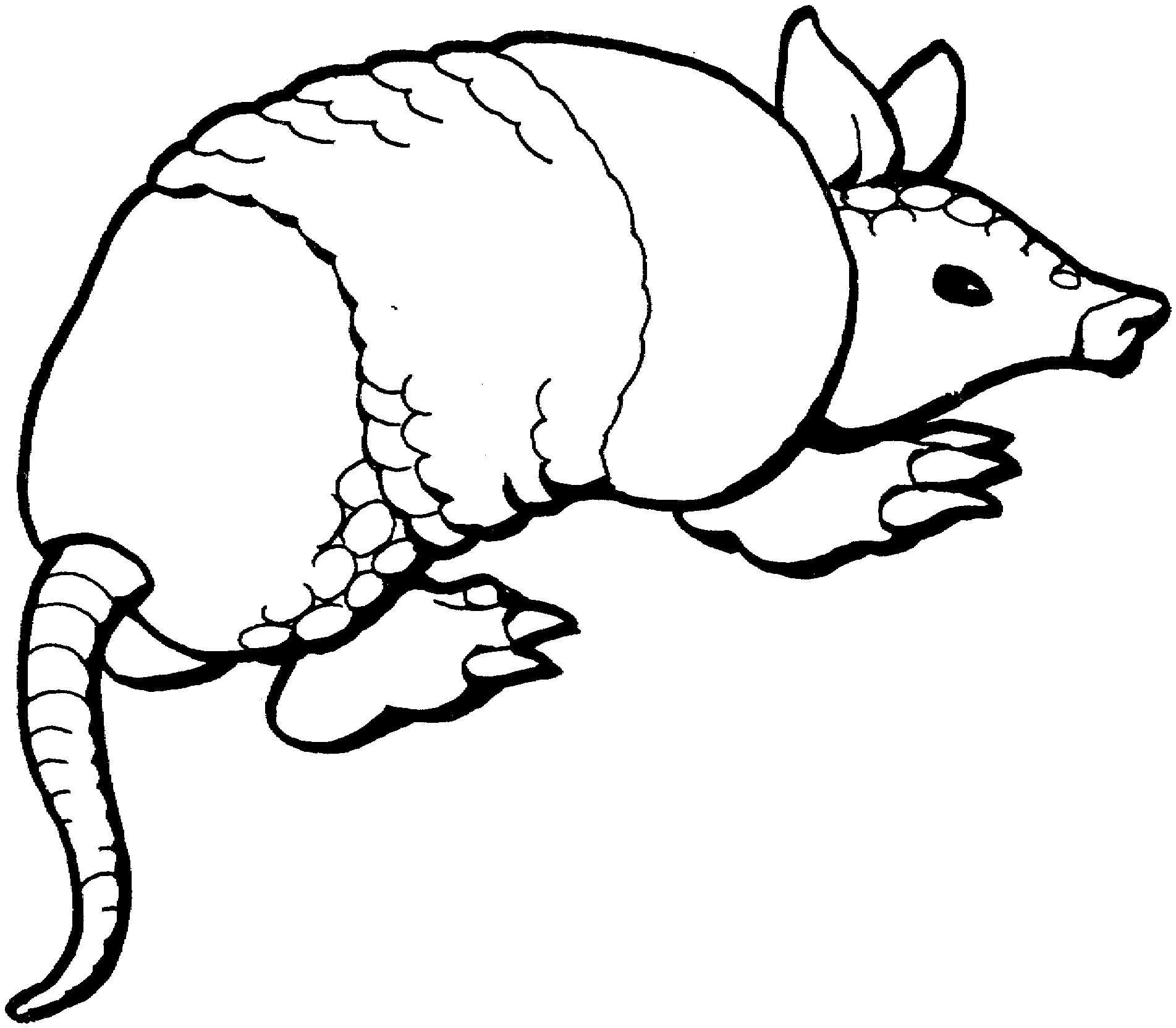 Awesome coloring page collection. Armadillo clipart black and white