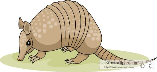 The top best blogs. Armadillo clipart cartoon