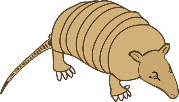 Armadillo clipart colorful. Coloring pages for kids