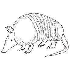 Armadillo clipart coloring page. Print image free pages