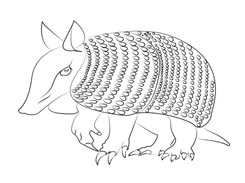 Armadilo free printable pages. Armadillo clipart coloring page
