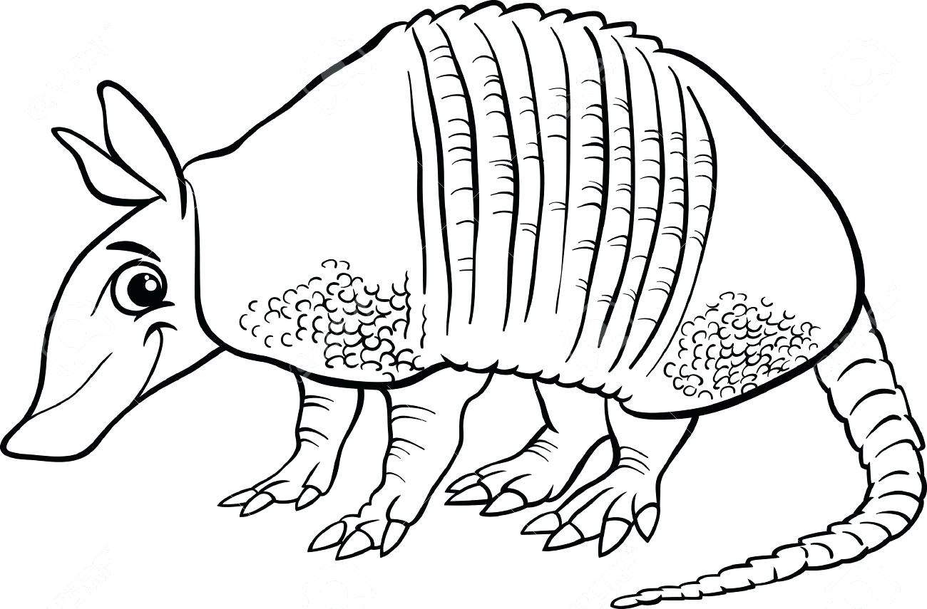 Awesome collection printable sheet. Armadillo clipart coloring page