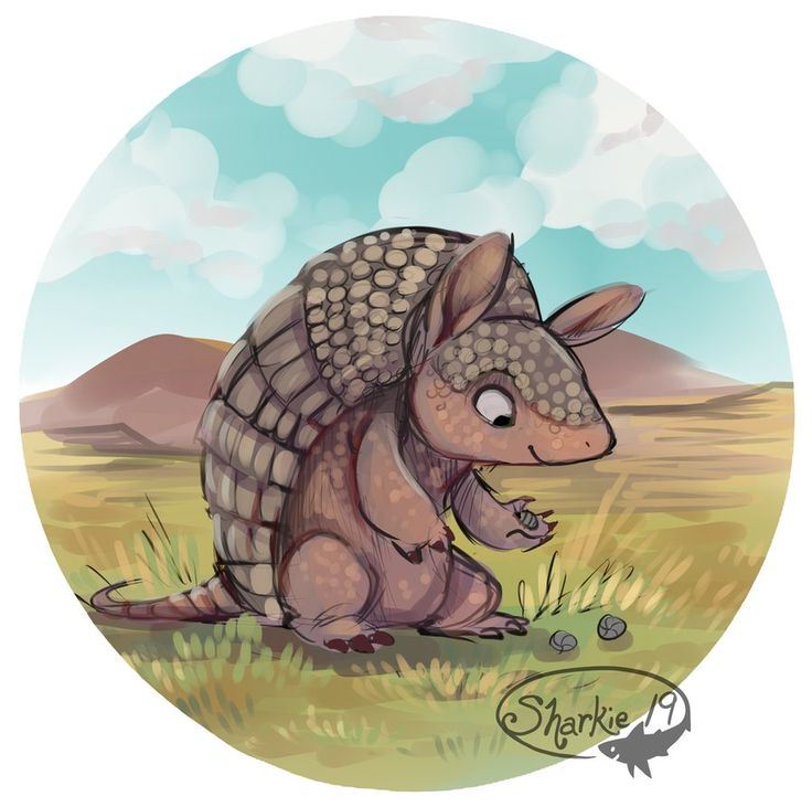 best armadillos images. Armadillo clipart cute