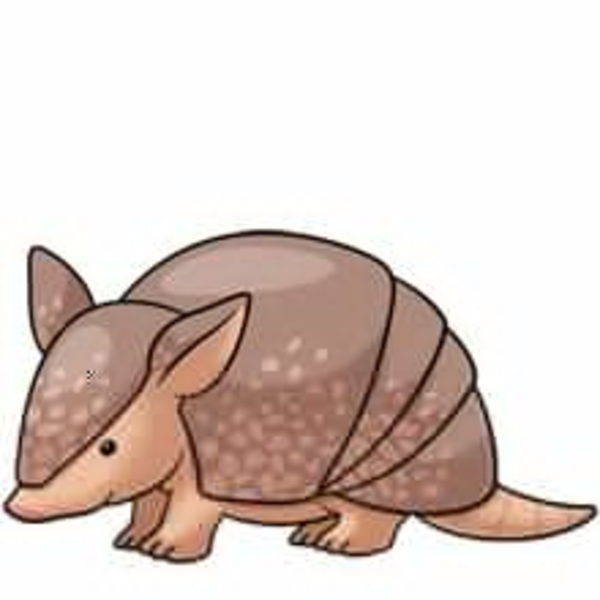 Armadillo clipart cute. Free images at clker