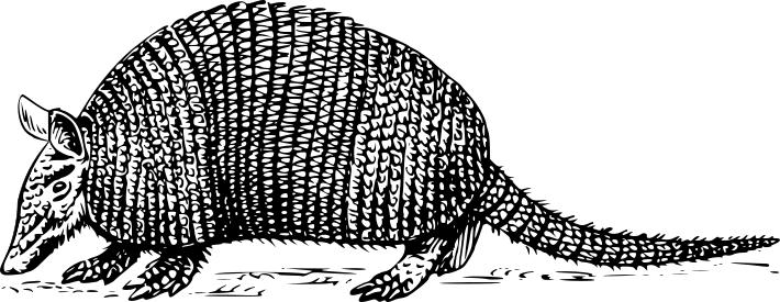 Armadillo clipart cute. Design droide