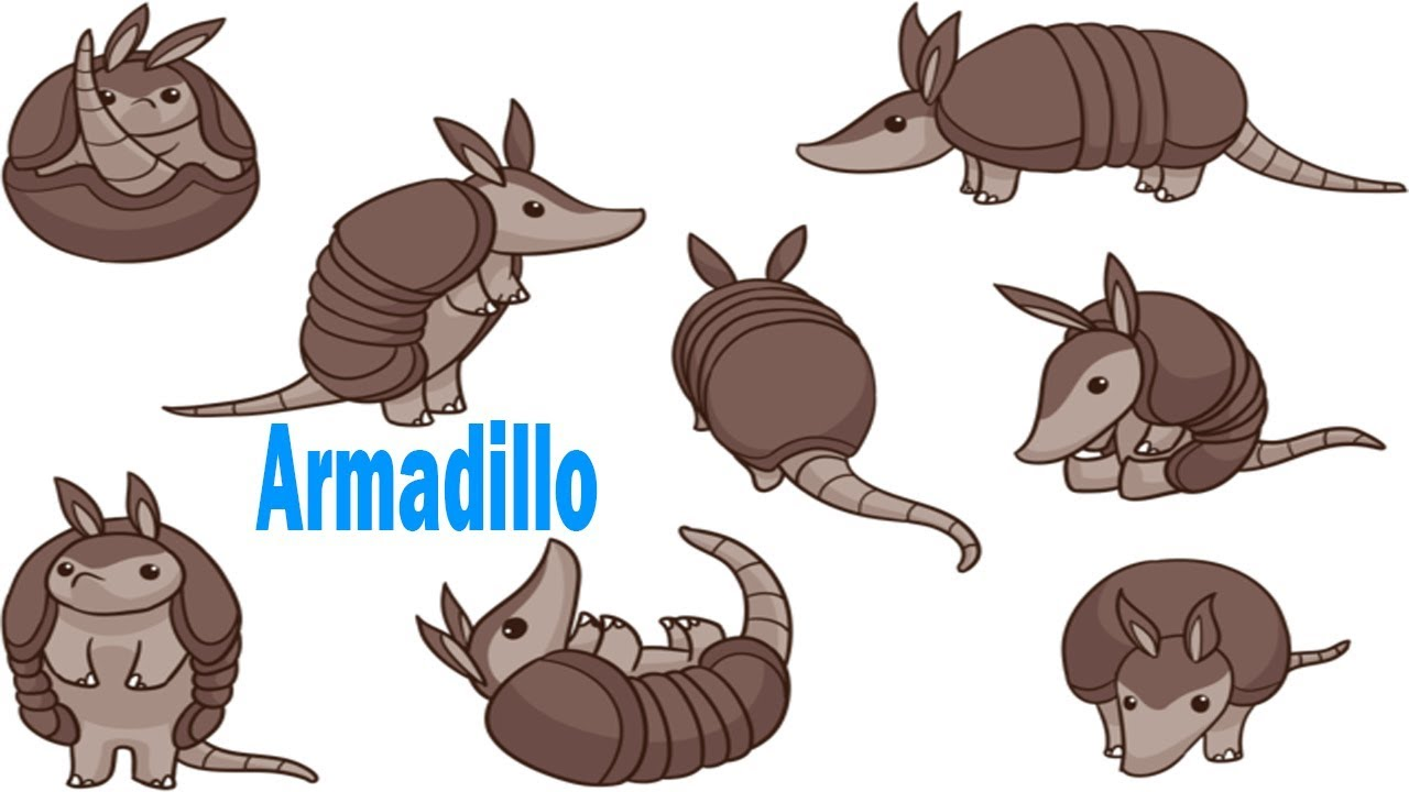Armadillo clipart drawn.  coloring pages video