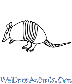 Armadillo clipart drawn. How to draw an