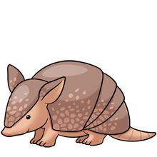 best cliparts images. Armadillo clipart simple