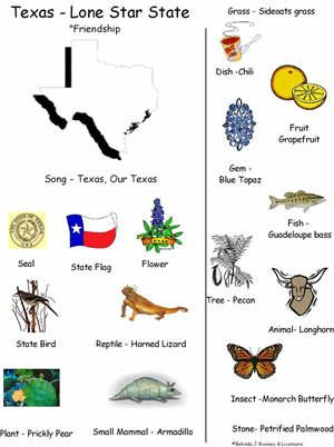 best images on. Armadillo clipart state symbol texas