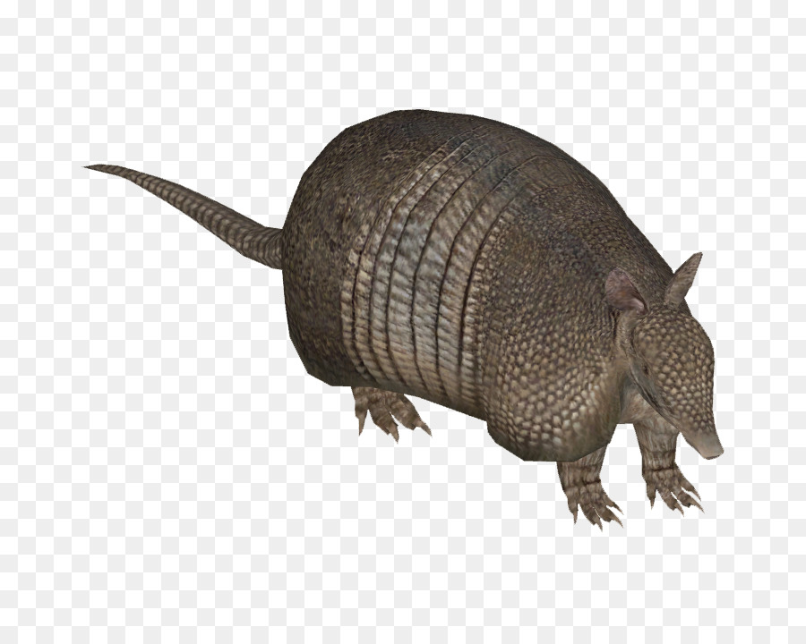 Armadillo clipart transparent. Zoo tycoon nine banded