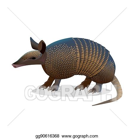 Isolated realistic placental . Armadillo clipart vector