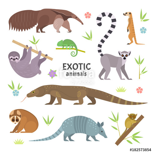Armadillo clipart vector. Exotic animals illustration with