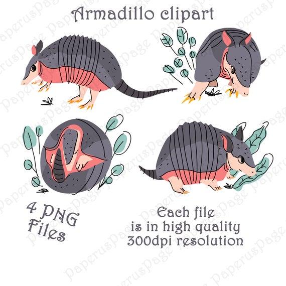 Armadillos cute painted watercolor. Armadillo clipart vector