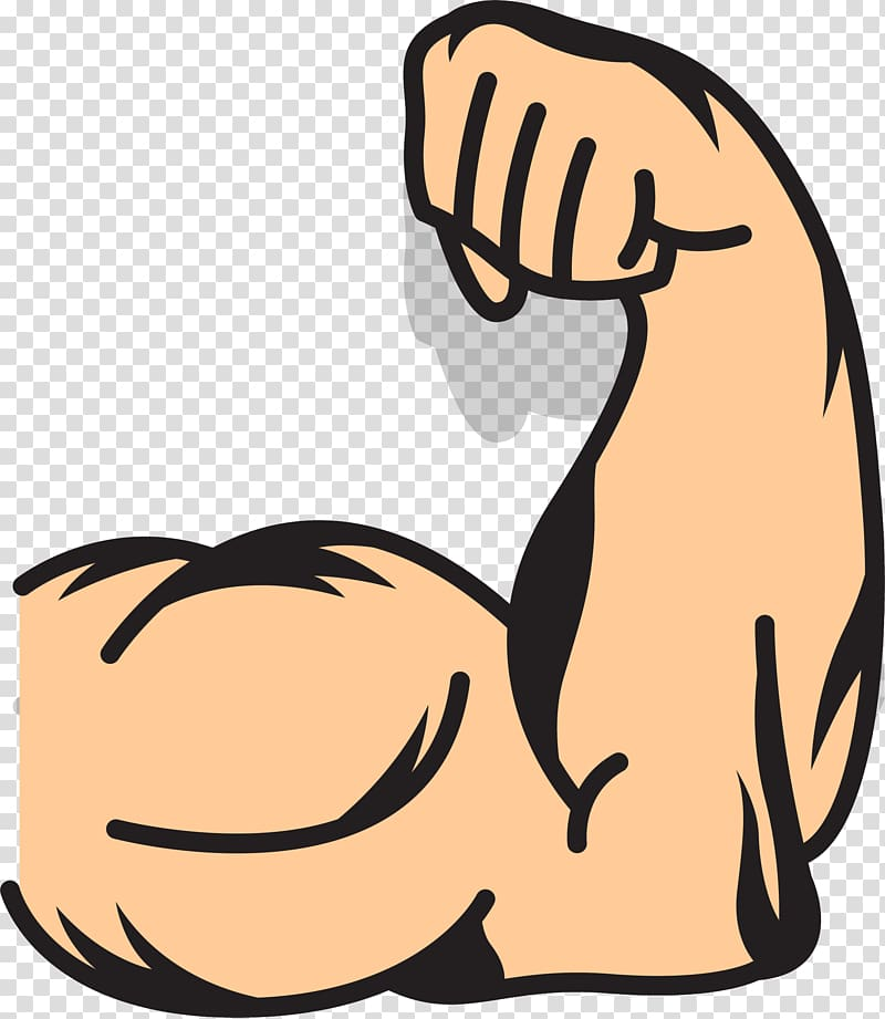 Human muscle illustration strong. Arms clipart