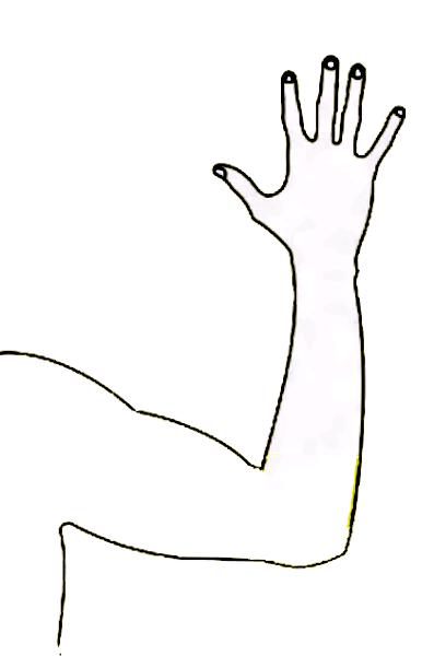 Arm clipart arm outline.  images of black