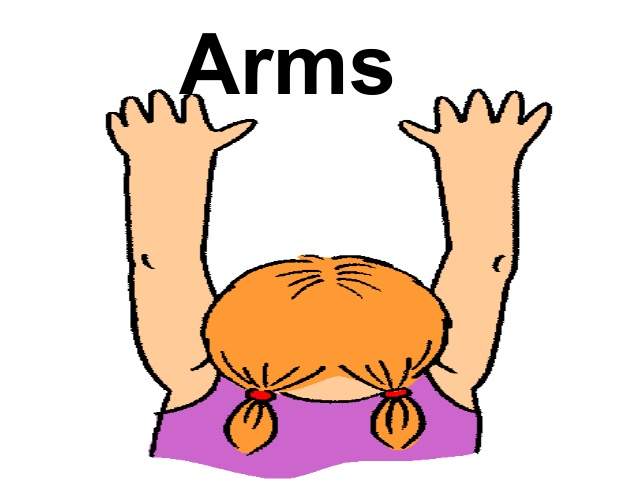 Parts of . Arms clipart body part