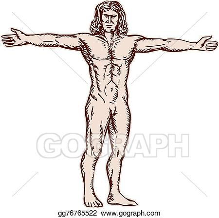 Arms clipart drawing. Vector art vitruvian man