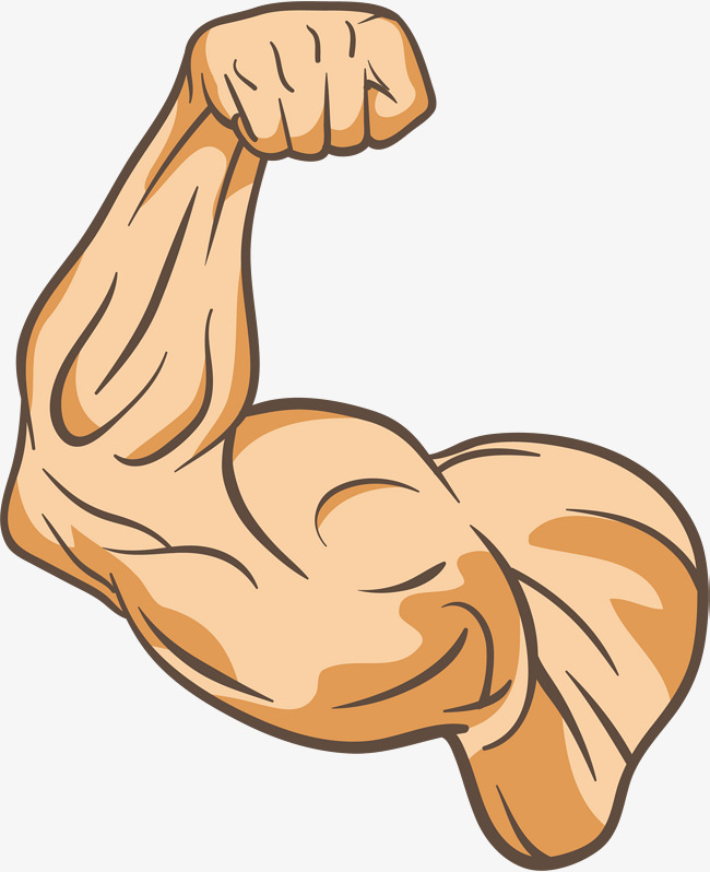 Arms clipart fitness. The trainer s arm