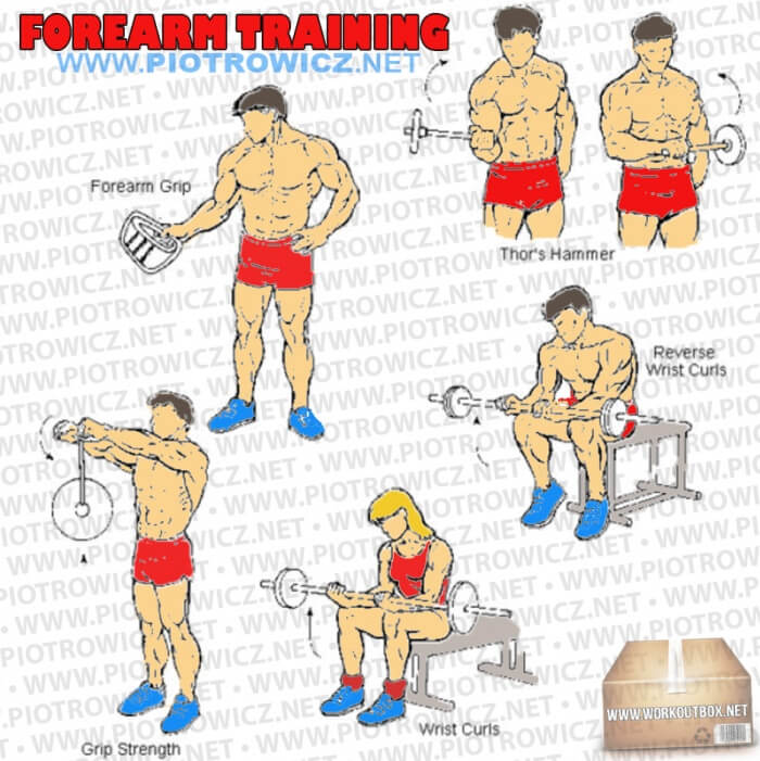 Training hardcore exercises and. Arms clipart forearm