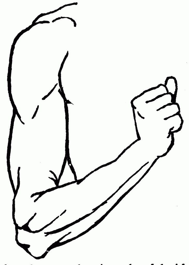 Arms clipart right arm, Arms right arm Transparent FREE for download on  WebStockReview 2020
