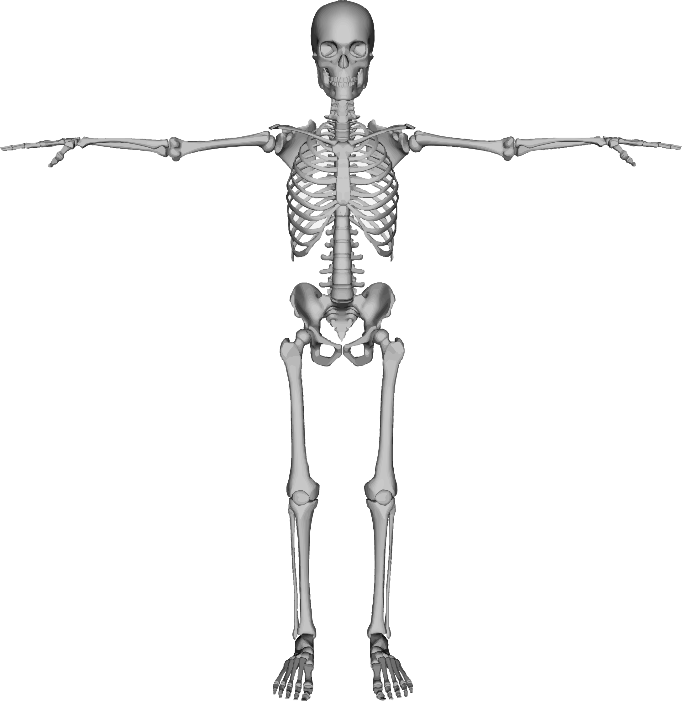 Arms clipart shoulder. Skeleton with out big