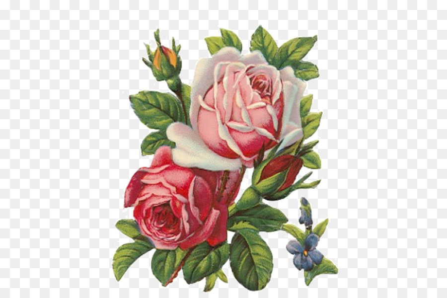 Rose apron vintage clothing. Art clipart oil painting