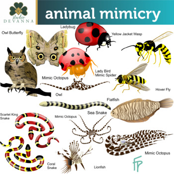 Animal by studio devanna. Artist clipart mimicry